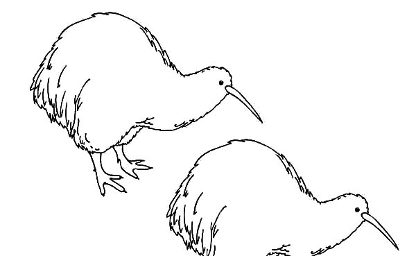twin kiwi bird coloring pages