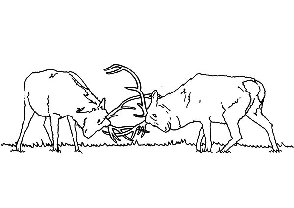 elk coloring pages   Download Online Coloring Pages for Free - Part 15