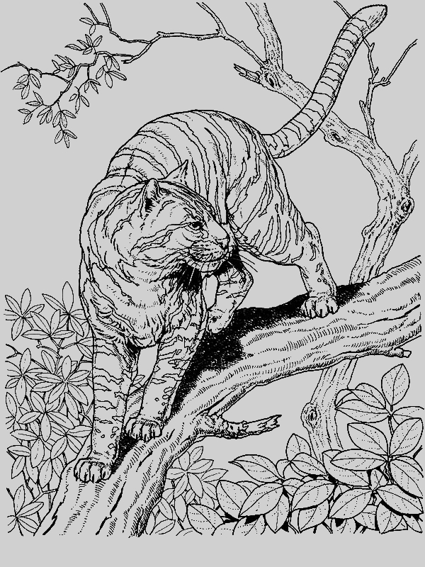 wild cats coloring pages - a tiger liked wild cat in the wild coloring page
