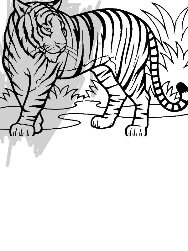 An Illustration Of Sumatran Tiger In Conservation Coloring