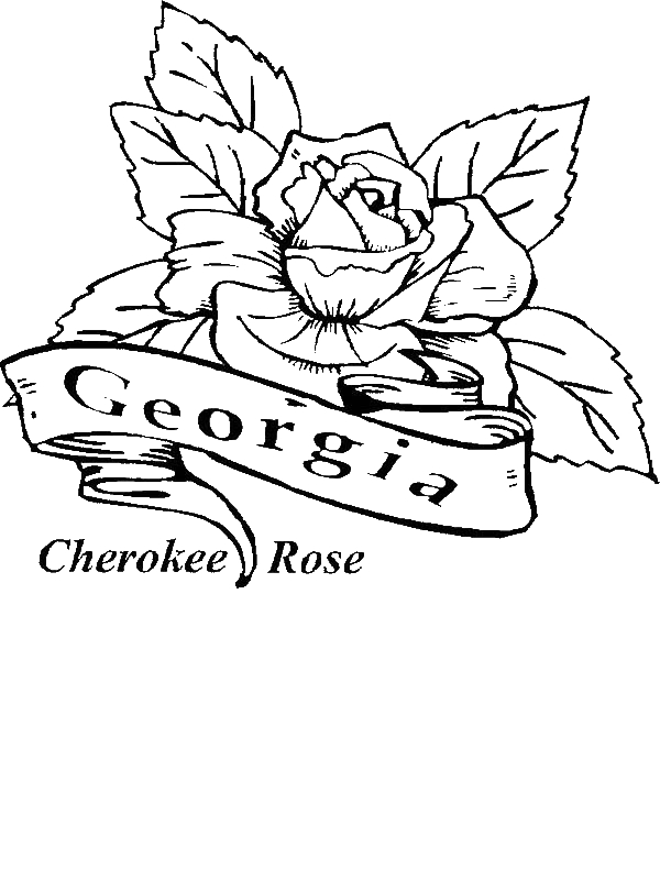 Beautiful Geia Cherokee Rose