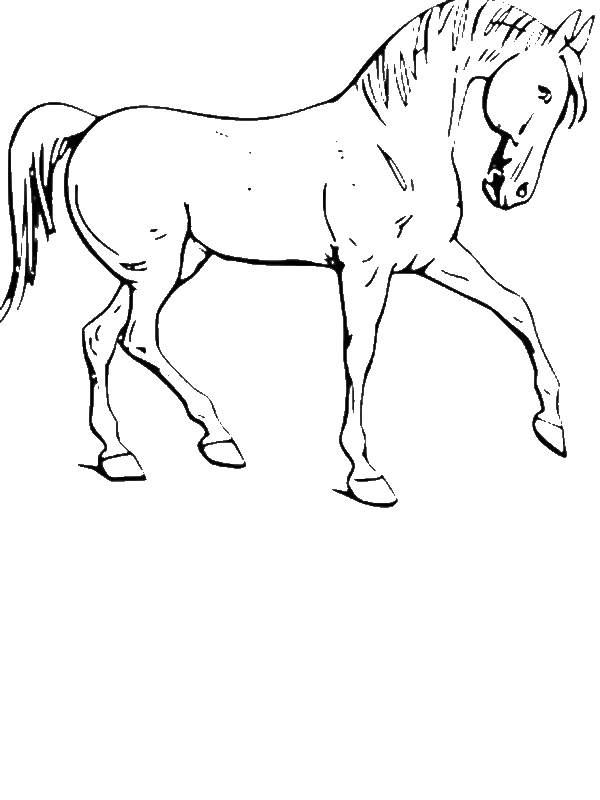 Calm Horse in in Horses Coloring