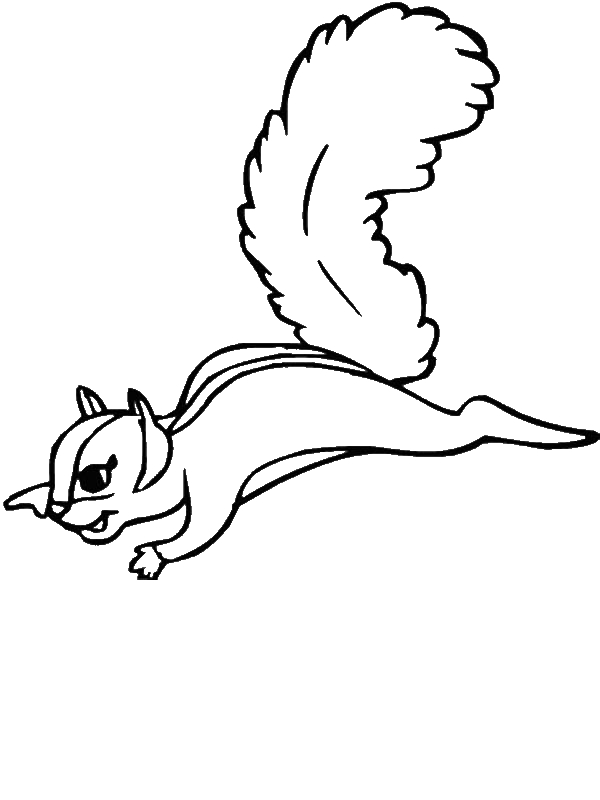 Flying squirrel coloring page clipartsco sketch coloring page for Flying squirrel coloring page