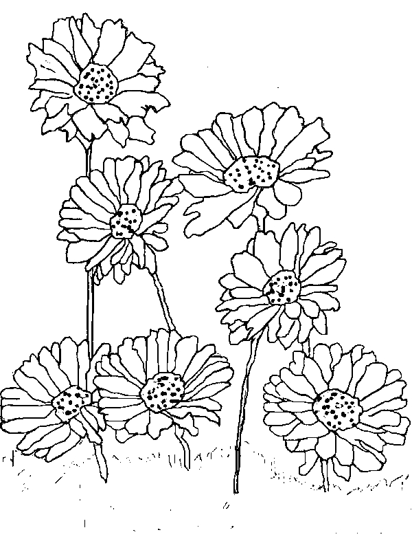 Planting Daisy Flower Coloring Page Download Print