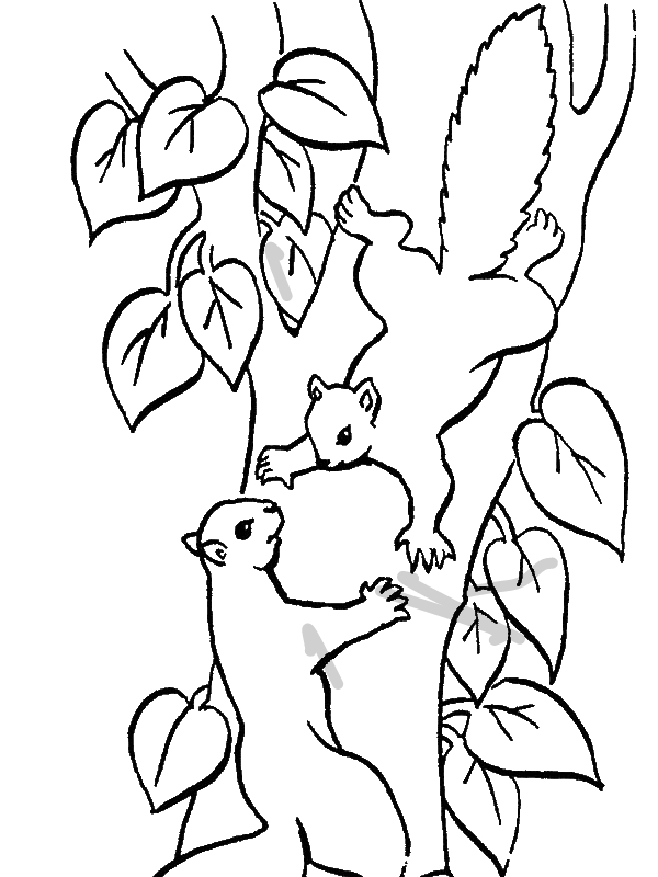 Squirrel Climbing Tree Coloring