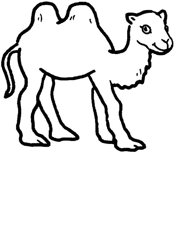 Camels For ColoringForPrintable Coloring Pages Free Download