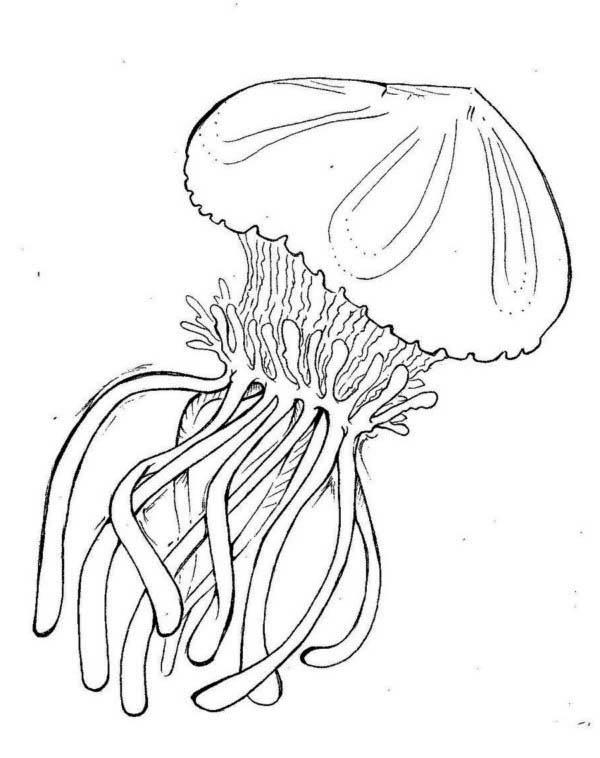 Box Jellyfish Coloring Page Download