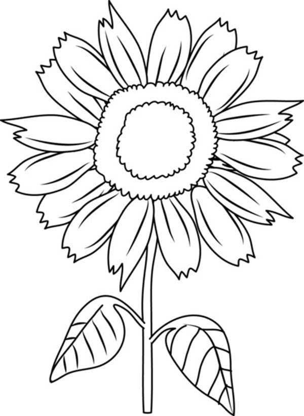 Beautiful Sunflower Coloring Page