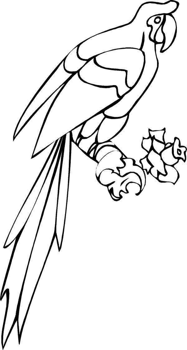 Long Tail Parrot Coloring Page: Long Tail Parrot Coloring ...