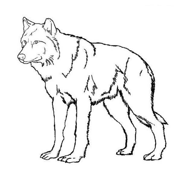 christmas wolf coloring pages | Amazing Wolf Coloring Page - Download & Print Online ...