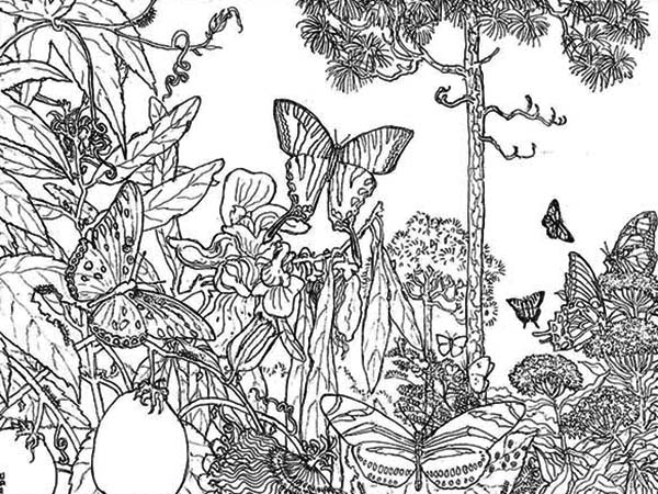 Butterfly Rainforest Insect Coloring Page Download