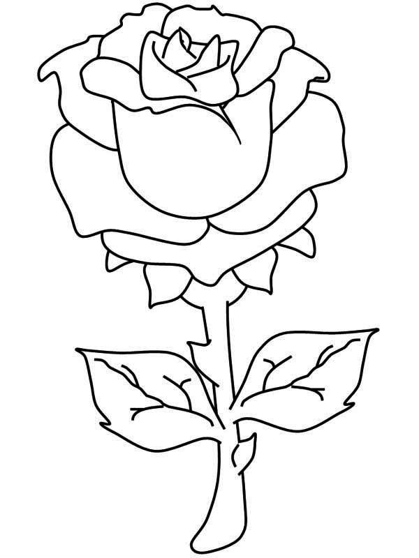 One Beautiful Rose Coloring Page - Download & Print Online ...