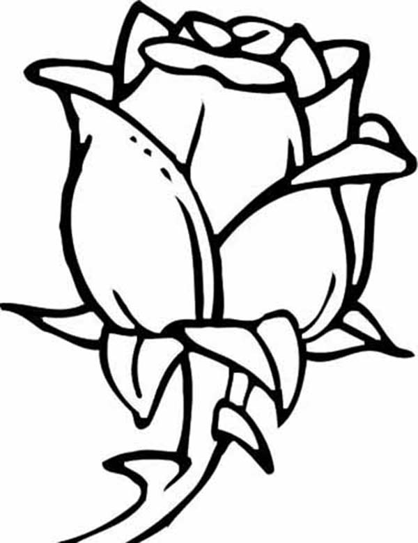 Rose Flower for Beautiful Lady Coloring Page - Download ...