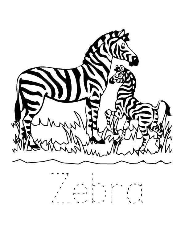 Zebra In The Zoo Coloring Page - Download & Print Online ...