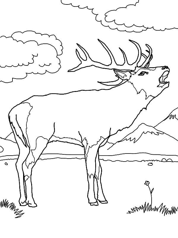Elk Hunting Coloring Pages